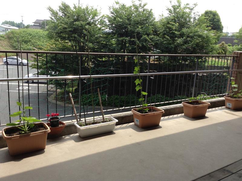 バルコニーでは野菜や花を育てています